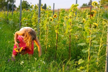 Beim Blumen und Kräuter pflücken