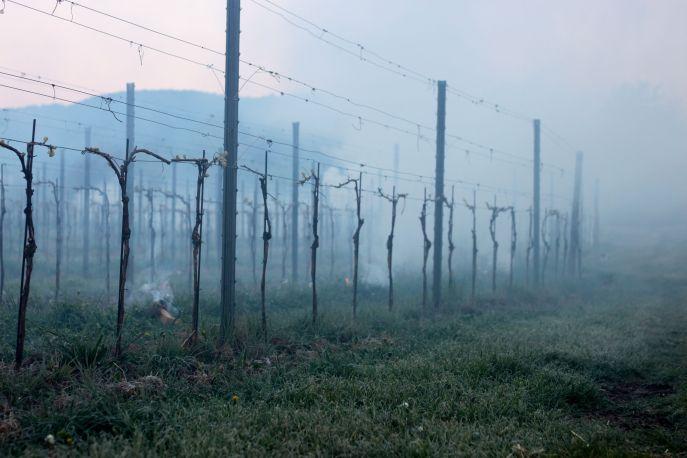 Weinfrühling (40)