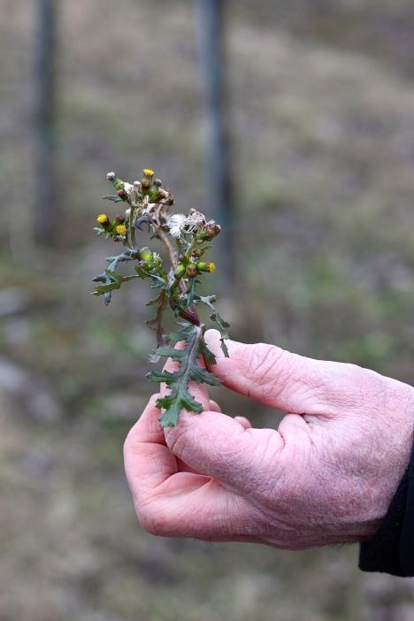 Vegetation Weingarten