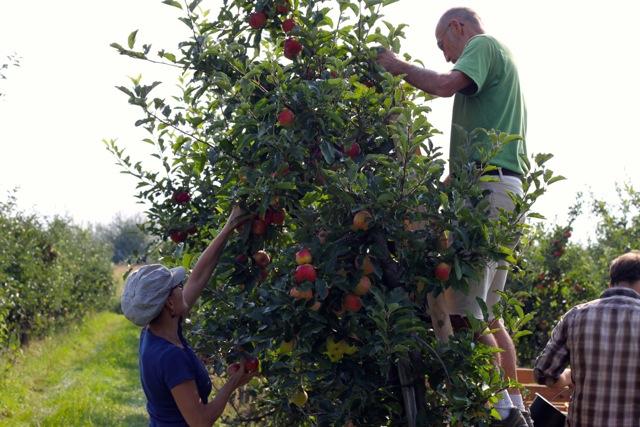 mamapapaäpfel